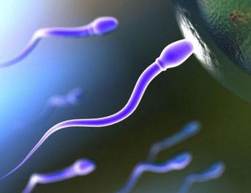 Какова вероятность забеременеть в начале менструации