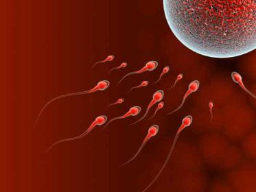 На какой день созревает яйцеклетка после месячных